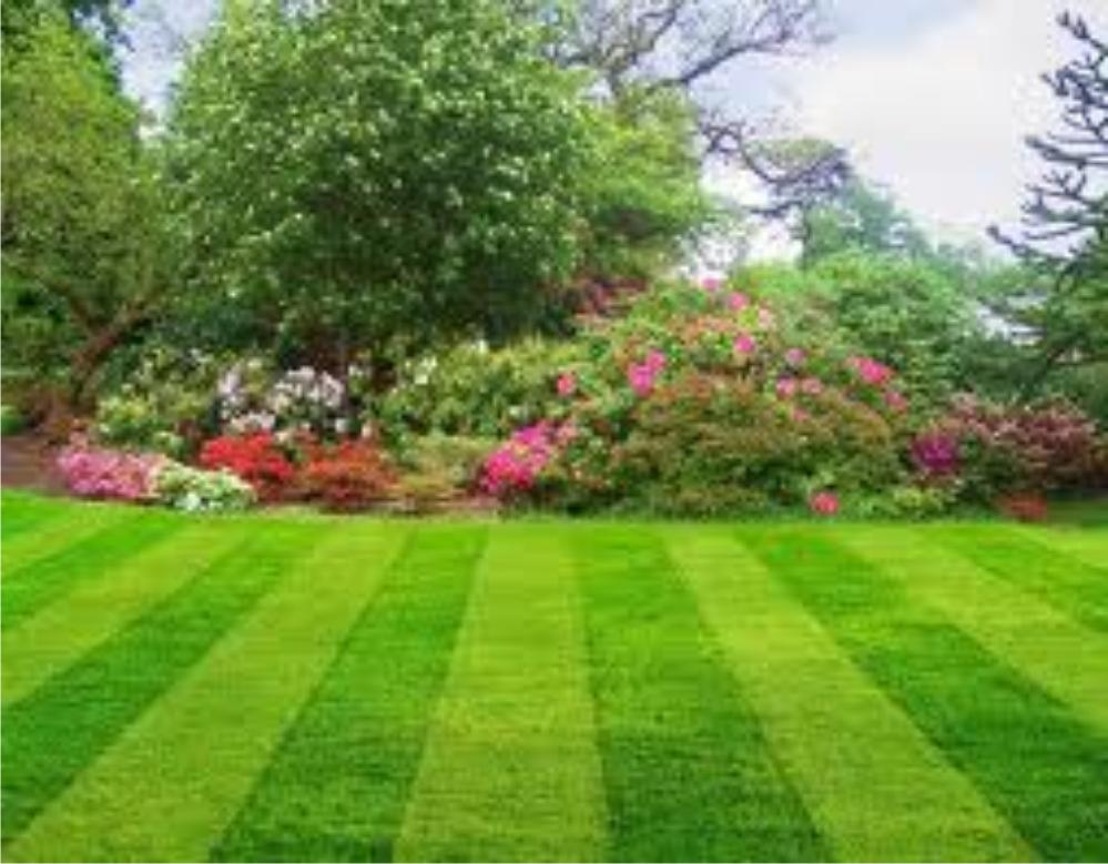 Domestic Turfit Lawns
